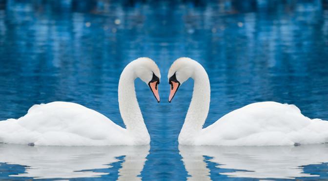 Paartherapie oder Beziehungstherapie?